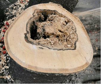 Anfrage 24.11.2020 – Bäume entlang Kreisstraße 20